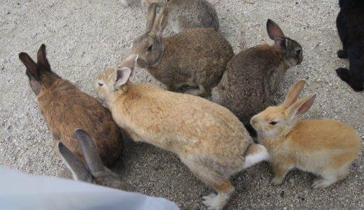 【うさぎ島】広島県の大久野島でうさぎと遊んできたよ