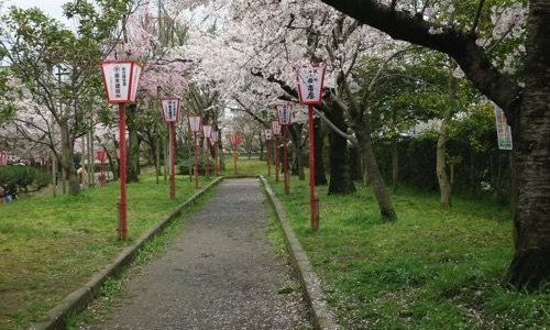【奈良】大和郡山(やまとこおりやま)のお城祭り。お城を囲む「御殿桜」が見事でした!